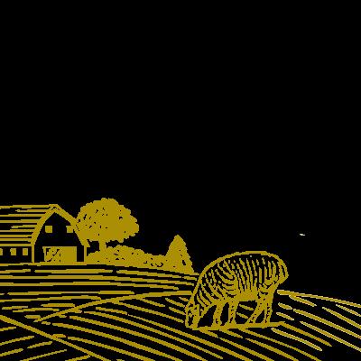 Criadores de Ovino
